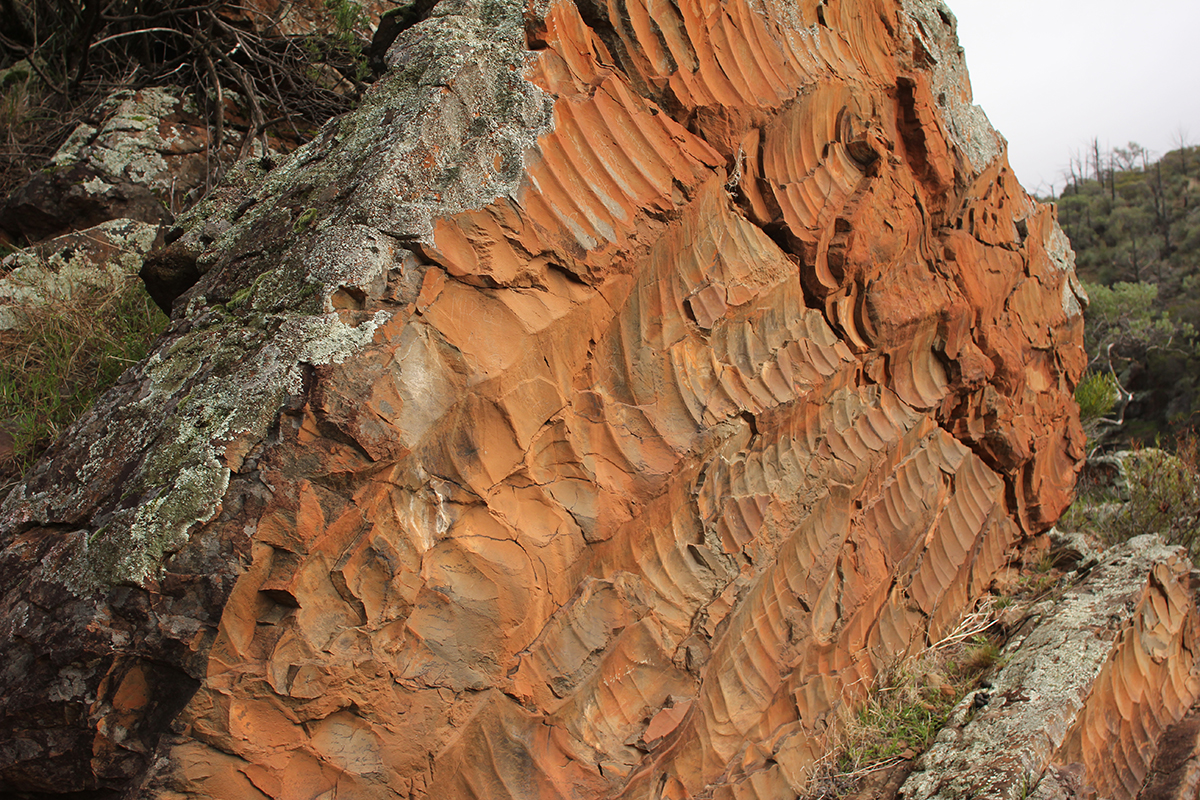 Ripples in the Elatina Formation in South Australia. (Photo by: Dr. Ryan Ewing)