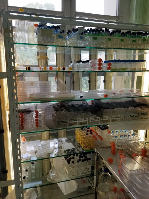 Shelves with diatom cultures. (Photo courtesy of Victoria Scriven)
