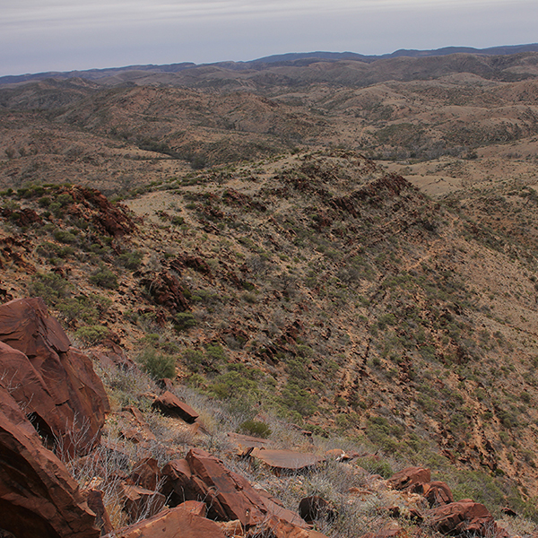 The Elatina Formation in South Australia. (Photo by: Dr. Ryan Ewing)
