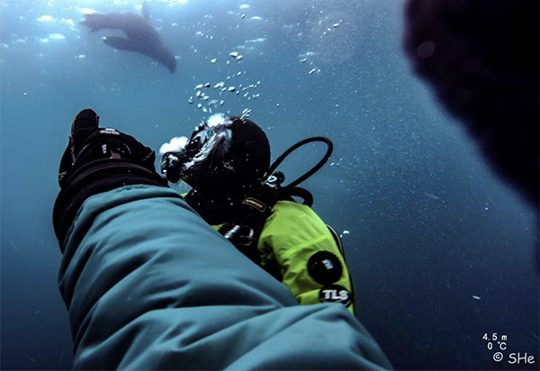 Researchers on the expedition, diving and looking up at a penguin. (Photo courtesy of Dr. Aaron Galloway.)