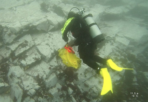 A researcher on the expedition, diving and collecting samples. (Photo courtesy of Dr. Aaron Galloway.)
