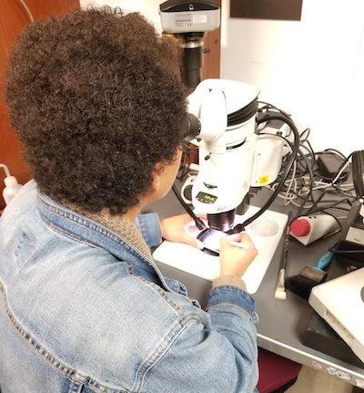 Dr. Bryant hard at work on the microscope she used to analyze her graduate school research samples. (Photo courtesy of Dr. Bryant.)