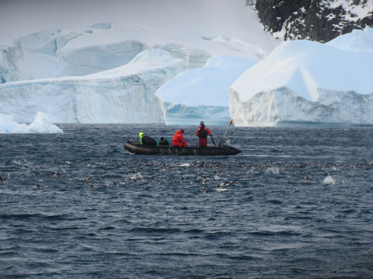 Dive team taking measurements in the waters off of Antarctica. Photo by Andrew Klein.