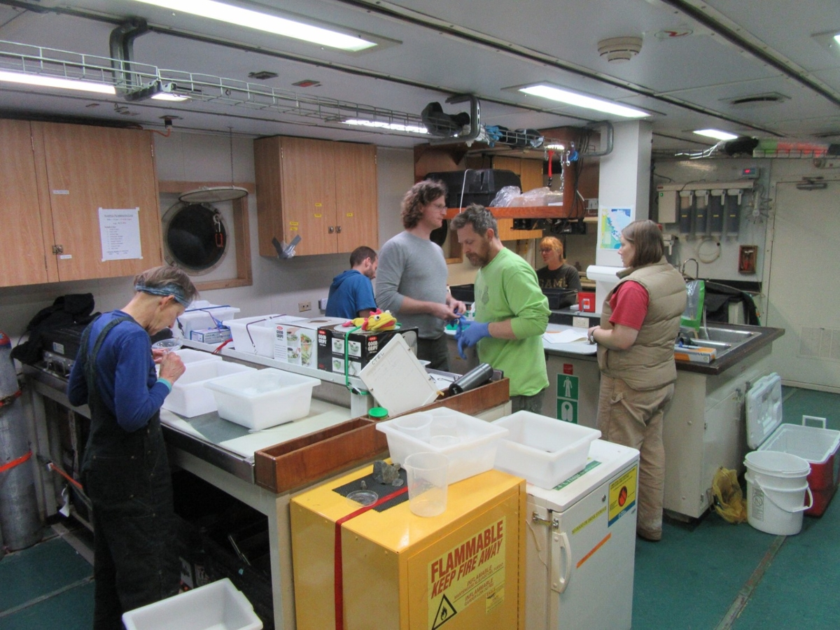 Researchers cataloging specimens aboard the research vessel. (Photo by Andrew Klein.)
