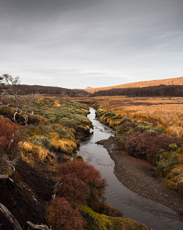 Peatlands in Tierra del Fuego. (Photo by Patrick Campbell.)