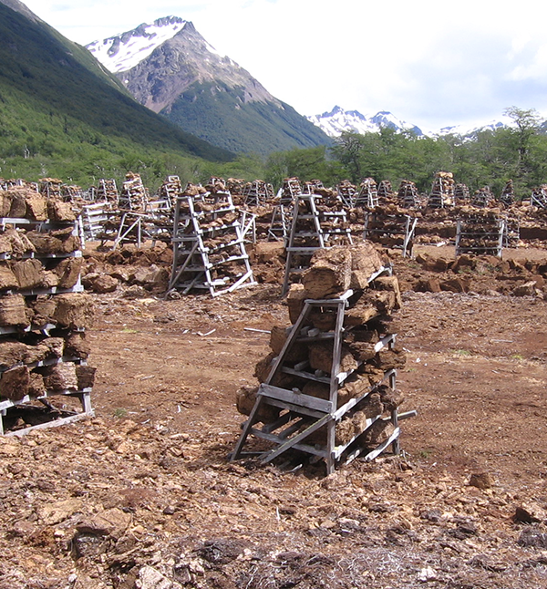 Peat blocks cut up and drying on racks, in Tierra del Fuego. (Photo by Loisel.)