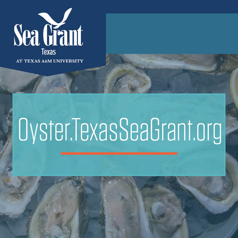 Texas Sea Grant Launches Oyster Mariculture Website thumbnail