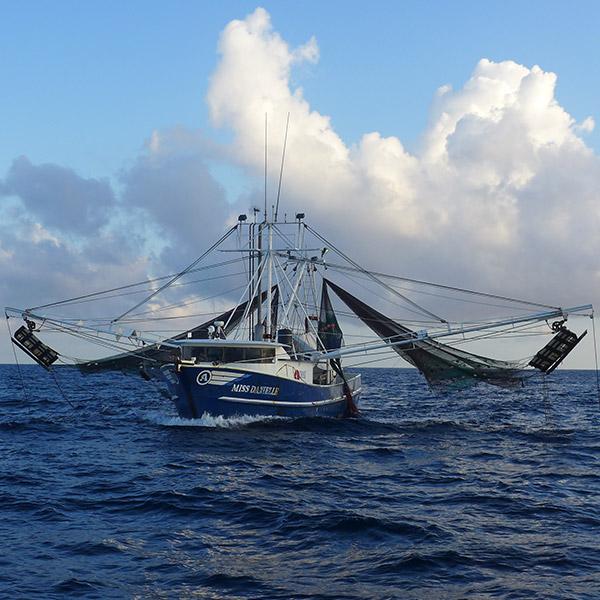 Louisiana, Texas Sea Grants Helping Develop Better BRDs thumbnail