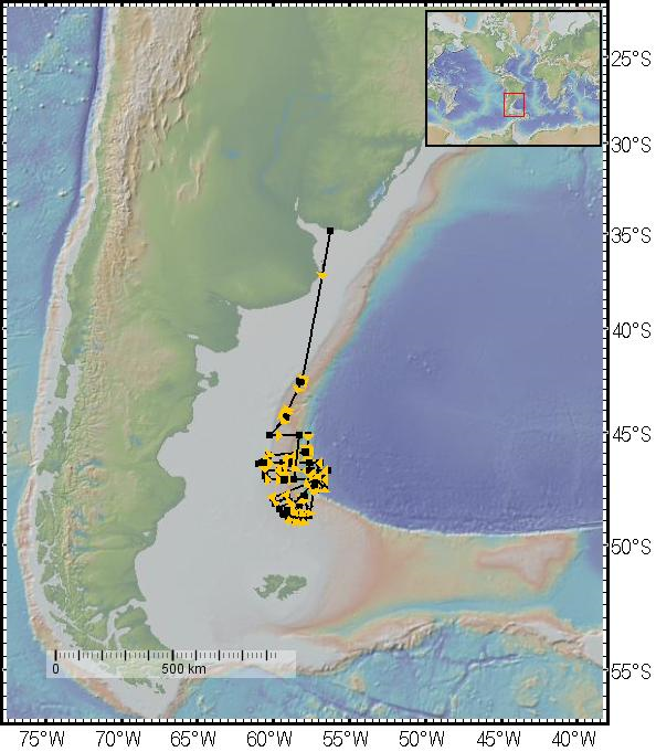 The Argentine margin and the track of the R/V Thomas G. Thompson. The ship embarked and arrived back to the port in Montevideo, Uruguay, with most work being done in a large area located north of the Falkland/Malvinas Islands. (Image courtesy of Ruby Schaufler.)