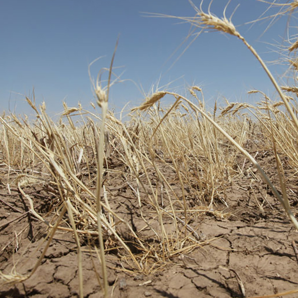 Texas A&M Study: Texas Will Face Driest Conditions Of The Last 1,000 Years thumbnail