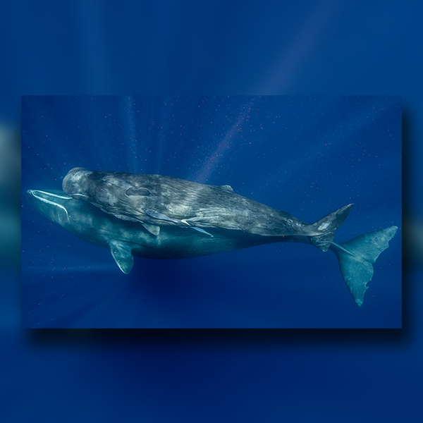 What If Humans Could Communicate With Whales? thumbnail