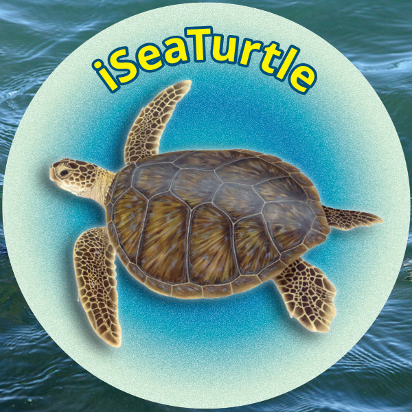 iSeaTurtle App Expands to Track Turtles Over the Entire Texas Coast thumbnail